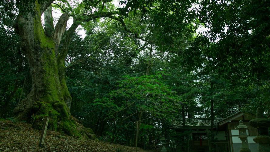【奈良県】忍坂山口坐神社と樹齢約500年のクスノキ【神社】(2019年4月23日)