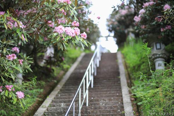 弁財天石楠花の丘