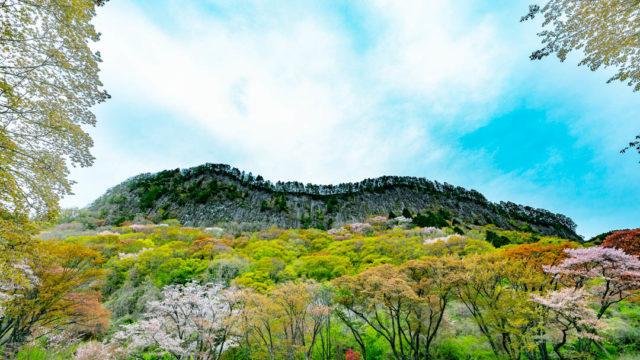 【奈良県】曽爾村の屏風岩公苑にいったよ【桜・撮影スポット】