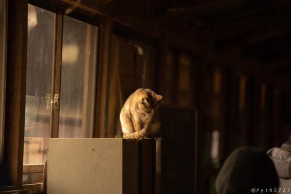 奈良県めえめえ牧場の猫
