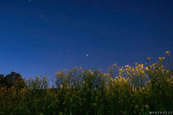 菜の花と星空