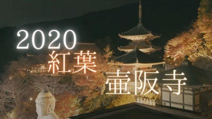 【動画あり】壷阪寺の紅葉とライトアップを撮影に行きました