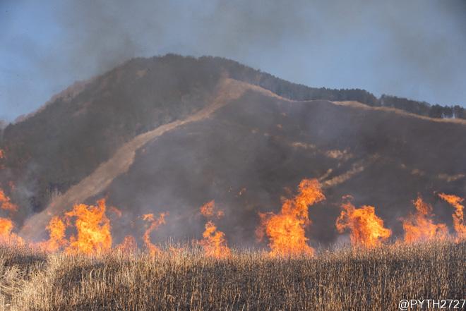 曽爾高原 山焼き 2021