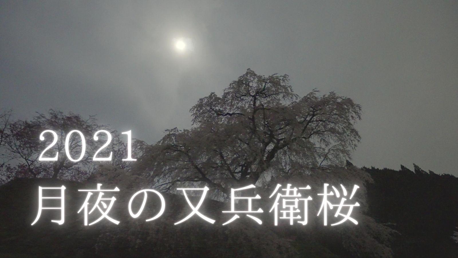 【動画】月明かりと満開の又兵衛桜(2021年)