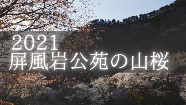 【2021】屏風岩公苑の山桜とライトアップを撮影に行きました(奈良県曽爾村)
