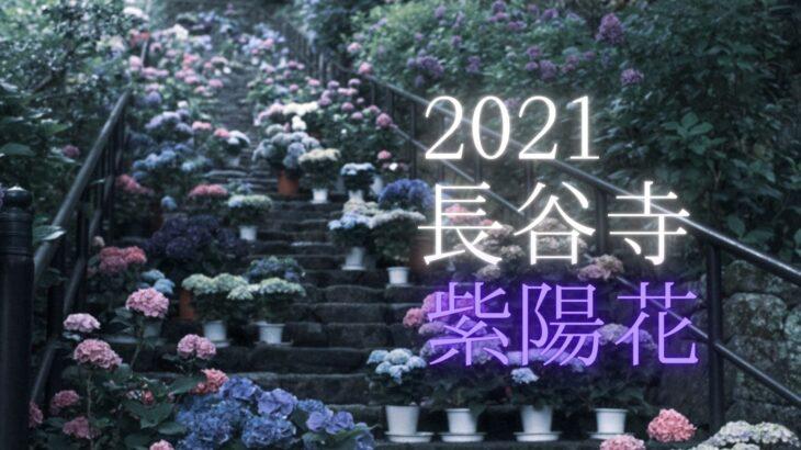 【2021】長谷寺の紫陽花を撮影に行きました(奈良県桜井市初瀬)