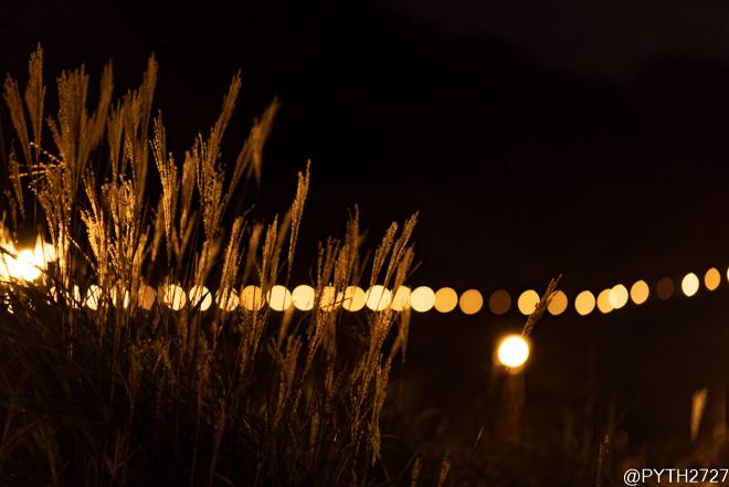 曽爾高原 夜